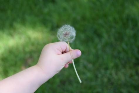 Spinning Dandelion